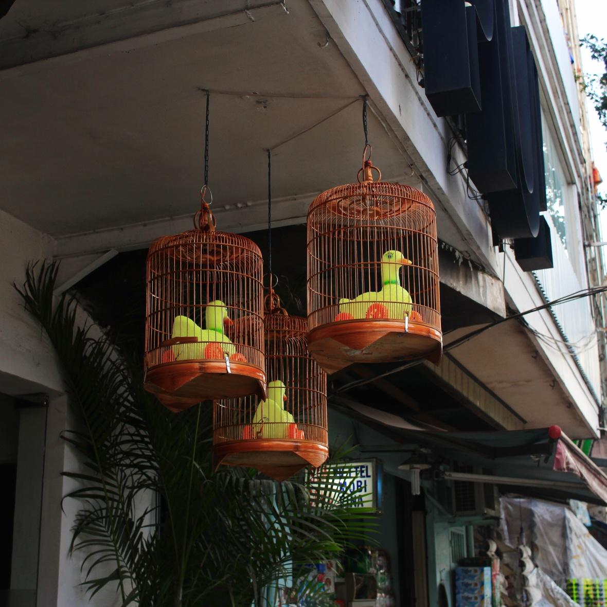 oiseauxplastiques