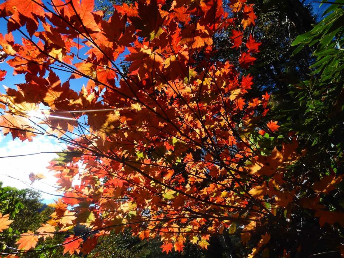 laurent ibanez derriere la colline oze les couleurs de l'automne