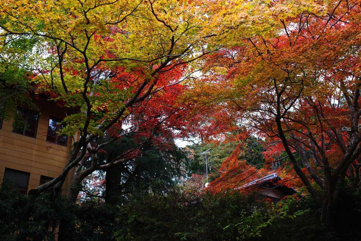 laurent ibanez derriere la colline daimonji foret