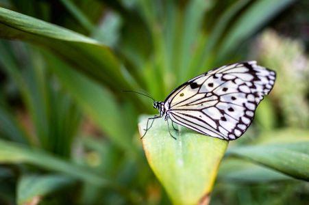 laurent Ibanez derriere la colline iles yaeyama papillon