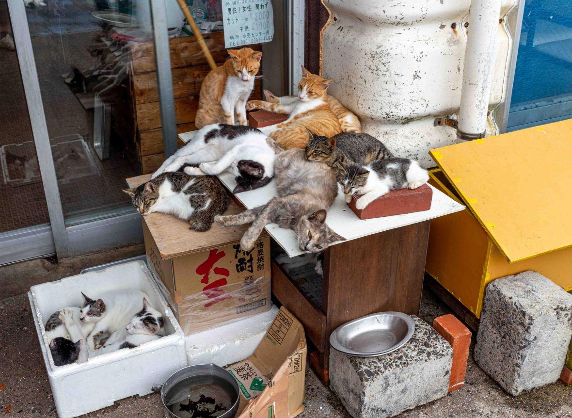 Laurent Ibanez Derriere la colline Ikeshima l'ile des chats